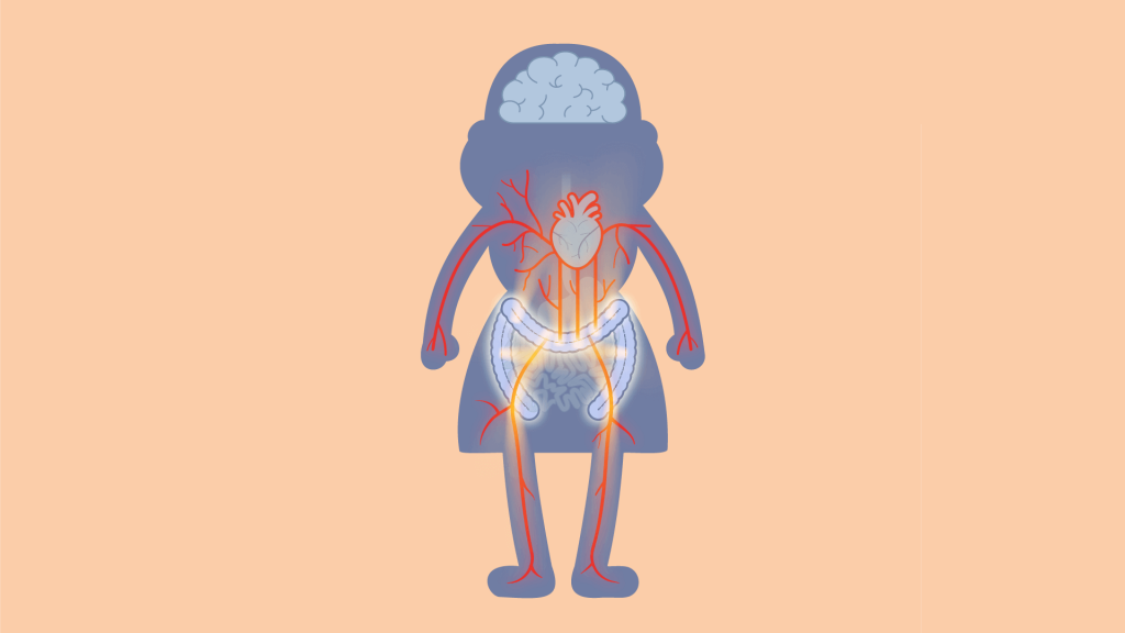 An illustration of the gut connecting to the cardiovascular system